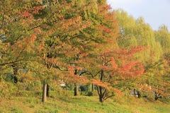 листья kyoto осени Стоковые Изображения RF