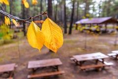 2 листь бука Стоковое Изображение RF