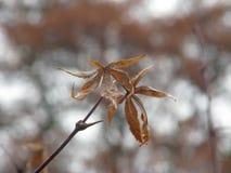 2 листь говорят их окончательное прощание Стоковое Изображение