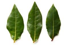 3 листь залива изолированного на белизне Стоковое фото RF