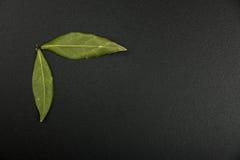 2 листь залива на доске Стоковые Фотографии RF