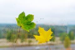 2 листь осени на стекле окна Стоковая Фотография RF