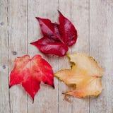 3 листь осени Стоковое Изображение