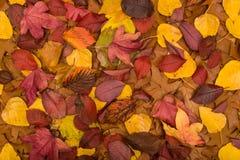 3 листь осени Стоковая Фотография RF