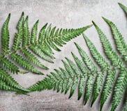 2 листь папоротника на серой деревенской конкретной предпосылке Стоковая Фотография