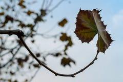 3 листь падения Стоковая Фотография