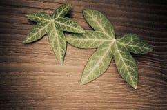 2 листь плюща на деревянной предпосылке Стоковые Фотографии RF