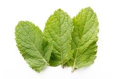 3 листь свежих мяты изолированного на белизне Стоковое Изображение RF