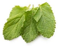 3 листь свежих мяты изолированного на белизне Стоковые Фотографии RF
