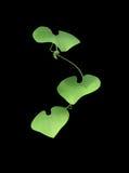 3 листь формы сердца Стоковые Изображения