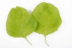 2 листь шпината Стоковая Фотография RF