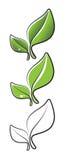 2 листь Стоковая Фотография RF