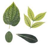 4 листь Стоковые Фотографии RF