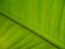 лист банана Стоковое Фото