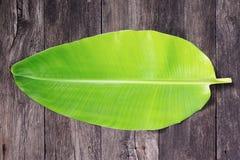лист банана Стоковые Изображения RF