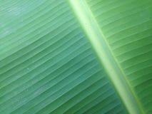 лист банана Стоковое фото RF