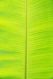 лист банана Стоковые Изображения