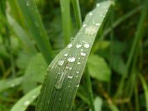 лист травы Стоковые Изображения RF
