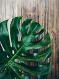 лист monstera на деревянной предпосылке Стоковые Изображения