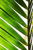 лист nypa Стоковые Фото
