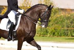 дисциплинируйте одетьнный dressage спорт конноспортивного изображения horsewoman лошади игры проформы олимпийский реалистический Стоковые Изображения RF