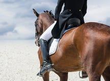 дисциплинируйте одетьнный dressage спорт конноспортивного изображения horsewoman лошади игры проформы олимпийский реалистический Стоковое Изображение