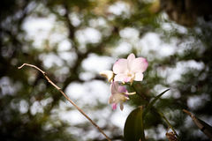 Исчерченный пинком цветок орхидеи Стоковые Фотографии RF