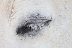 Исландская лошадь, конец вверх глаза Стоковая Фотография RF