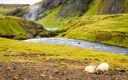 Исландский горный склон Стоковая Фотография