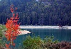 Италия, альт Адидже Trentino: Осень на небольшом озере стоковое изображение rf
