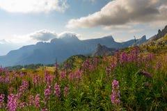 Итальянка Альпы, панорама на долине и Croda da Lago устанавливают Стоковые Изображения