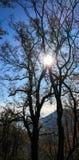 Итальянские древесины 02 стоковые фотографии rf
