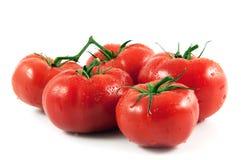 итальянские томаты Стоковое Изображение RF