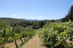 итальянский виноградник Тосканы Стоковые Фотографии RF