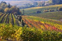итальянский виноградник Стоковые Фотографии RF