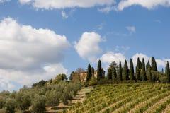 итальянский виноградник Стоковая Фотография