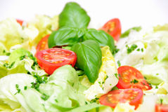 итальянский салат Стоковое Фото
