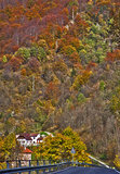Итальянское альп, цветы осени Стоковые Фотографии RF