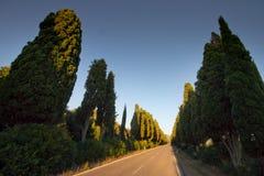 Италия, Тоскана, Castagneto Carducci, Bolgheri, дорога и cypresse стоковые изображения rf