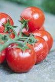 Италия, Тоскана, Magliano, пук томатов вишни, конец вверх Стоковая Фотография