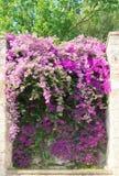 итальянка сада Стоковое Изображение RF