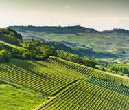 Итальянские виноградники в Langhe, Пьемонте Стоковое Изображение RF