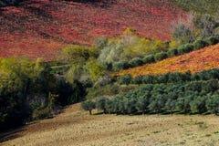 Итальянский ландшафт падения Стоковые Фотографии RF