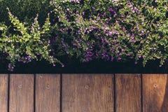 Итальянский современный модельный дом: Внешний деревянный пол с цветками Стоковая Фотография RF