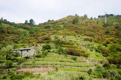 Итальянское сельское хозяйство террасы Стоковое Изображение RF