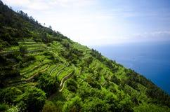 Итальянское сельское хозяйство террасы Стоковые Изображения RF