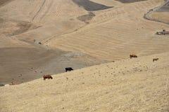 Итальянское agricolture Стоковое Изображение