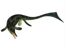 Ихтиозавр Cymbospondylus на белизне иллюстрация штока