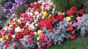 И больше цветков Стоковая Фотография RF