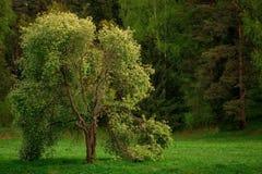 И ветви entwined друг с другом стоковое фото rf